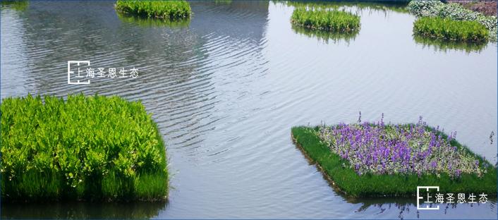 浮动湿地水上绿化应用