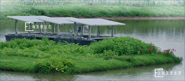 浮动湿地在氧化塘中的应用