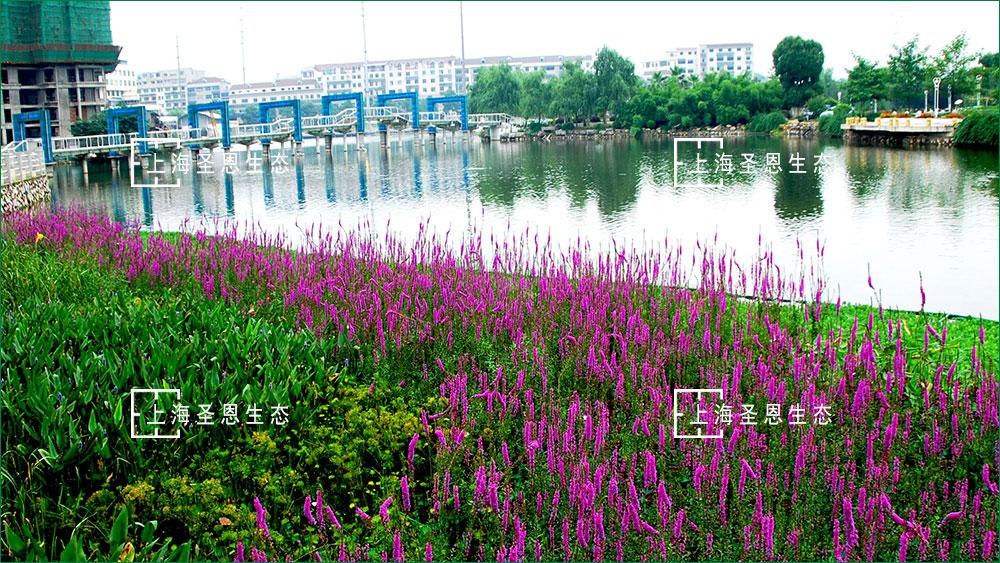 河道治理生态修复技术:漂浮移动湿地